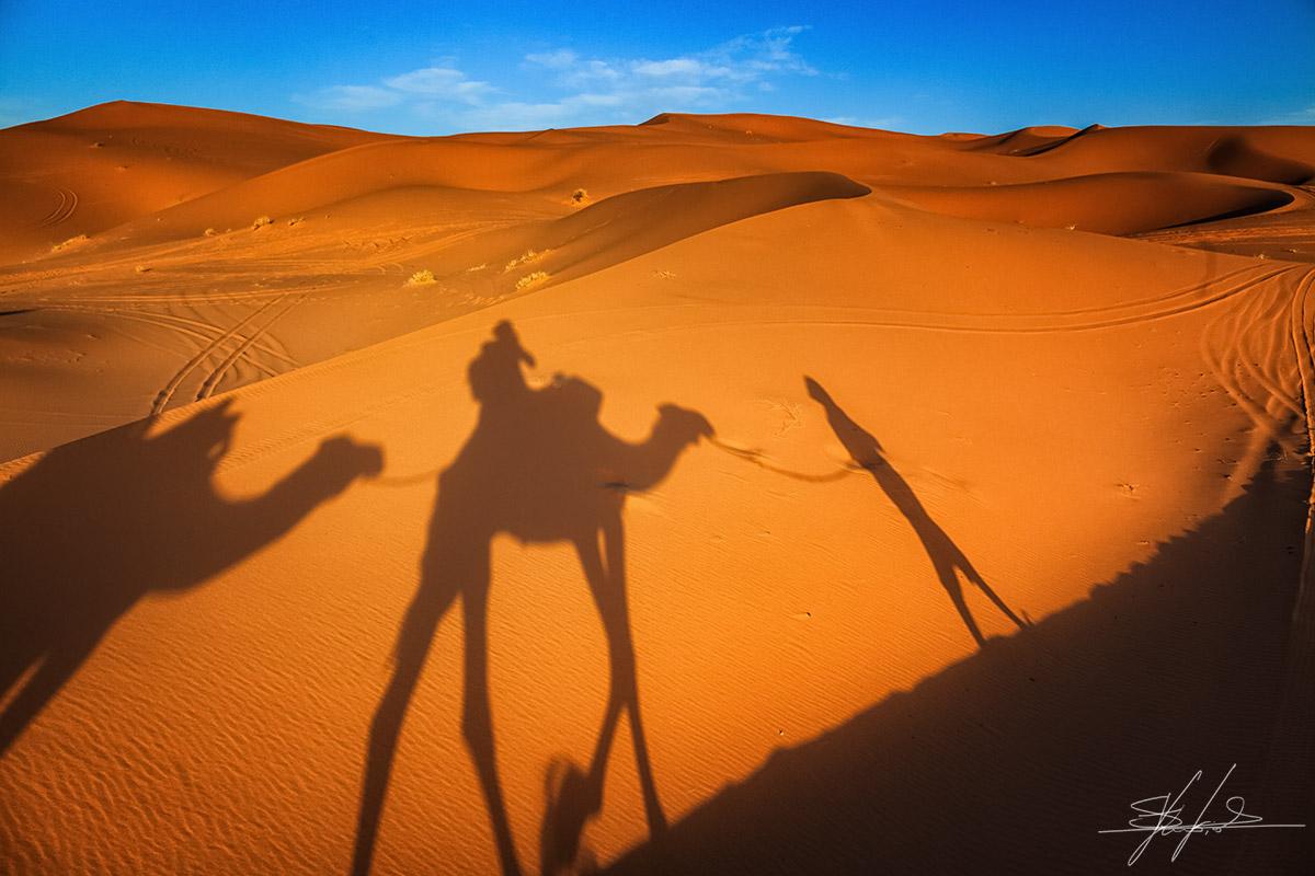 Dromedary_exploration_desert