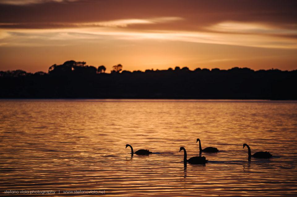 L'alba alla laguna dei cigni
