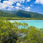 Daintree Forest - Queensland