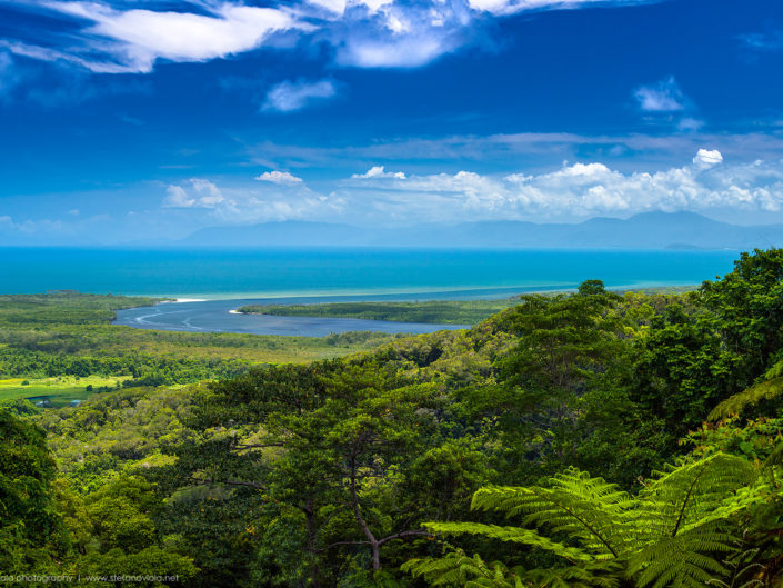 Daintree Forest - Queensland